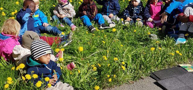 Barna i blomstereng